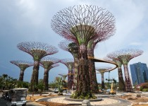 The Singapore Supertrees